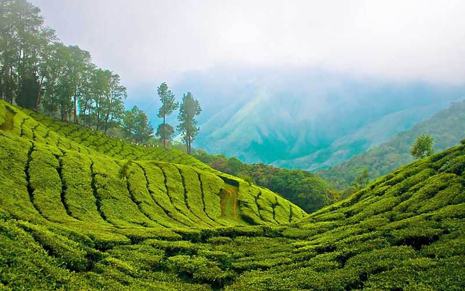 Munnar Which are best romantic getaways in India?